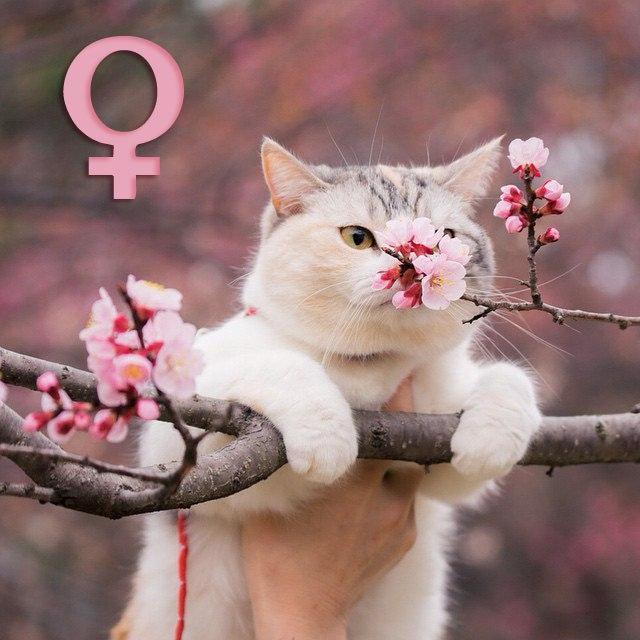 Как раскрыть в себе женственность?